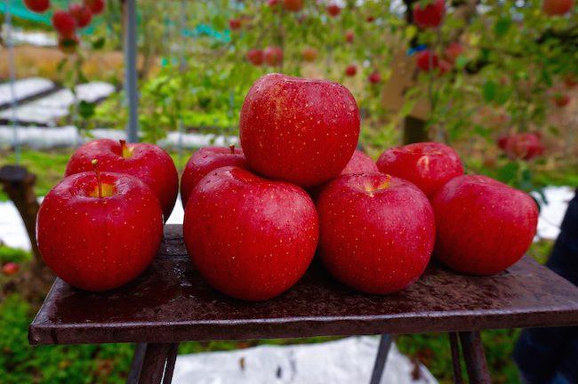 體驗摘蘋果